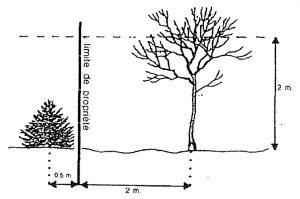 Entretien des plantations et des abords commune de saint etienne roilaye - Article 673 code civil ...