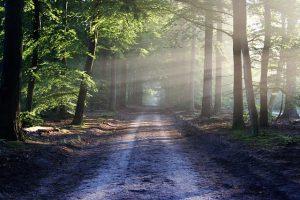 Nettoyons la nature et la planète @ Saint-Etienne-Roilaye | Saint-Étienne-Roilaye | Hauts-de-France | France