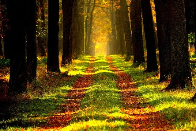 Réouverture des forêts après confinement